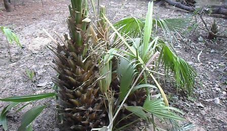 plante médicinale 1