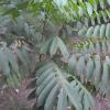 plante médicinale 2