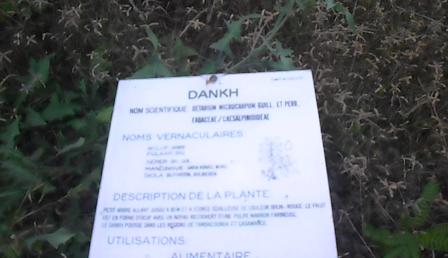 panneau descriptif des plantes 2
