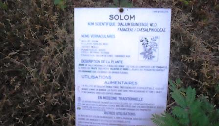 panneau descriptif des plantes 4