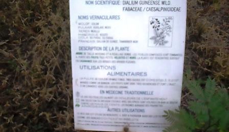 panneau descriptif des plantes 5
