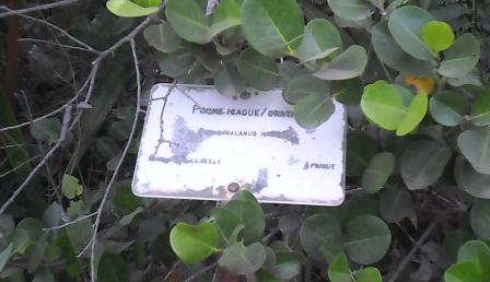 panneau descriptif des plantes 6