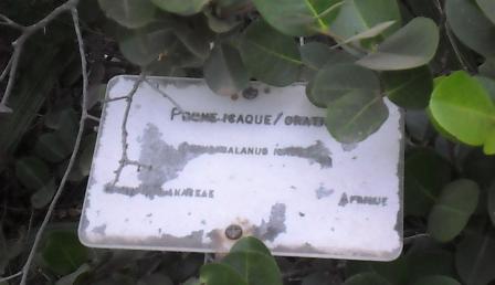 panneau descriptif des plantes 7
