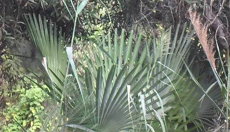 plante médicinale 9
