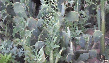 plante médicinale 14