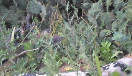 plante médicinale 17