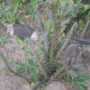 plante médicinale 18