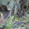 plante médicinale 19