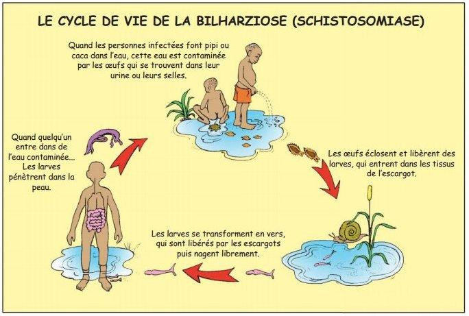 Bilarziose1