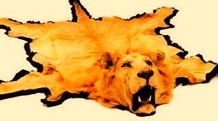 Peau de lion