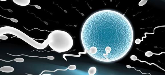 Sterilite masculine